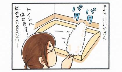 まろんのトイレ問題-3