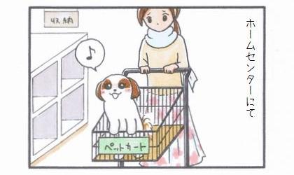 ペット用カート☆箱乗り編-1