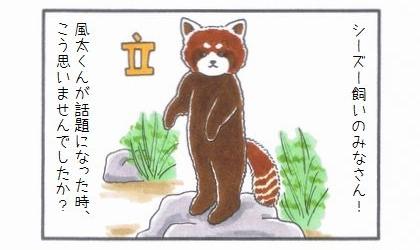 レッサーパンダの風太くん-1
