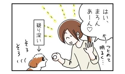 はい、あーん(つとめて明るく…)フィラリア薬を埋め込んだトマトを犬にあげる。疑い深い犬、そろそろと口にする