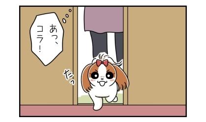 母の部屋のドアを開けたら、犬が入ってしまった。あっ、コラ!