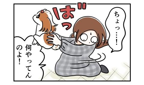 慌てて犬を抱き上げる ちょっと!何やってんのよ!