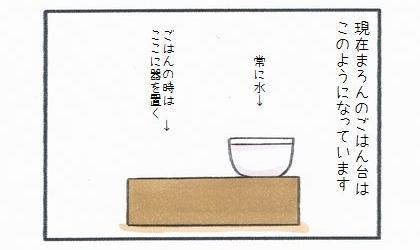 現在犬のご飯台はこのようになっています。右側に常に水、ご飯の時は左側に器を置く