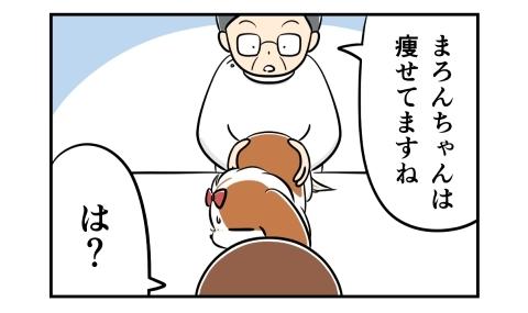 獣医さんが犬を触りながら、痩せてますね、と言った