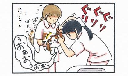 犬の耳掃除をする獣医さん。犬を布袋する看護師さん。犬は唸りながらもしっぽを振っている