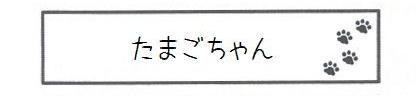 たまごちゃん-0