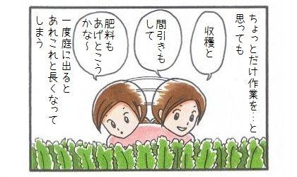 まろんの監視付家庭菜園-2