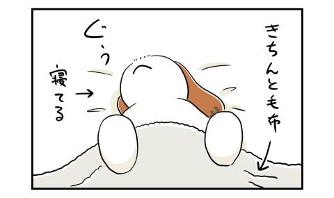 きちんと毛布を掛けて寝る犬