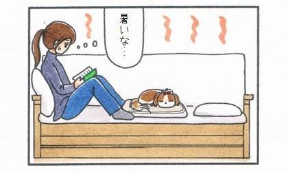ソファの上の毛布で丸まって寝る犬と本を読む飼い主。(室温が)暑いな…、と飼い主