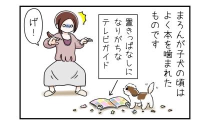 子犬の頃はよく本を噛まれたものです。置きっぱなしになりがちなテレビガイドをかじる犬