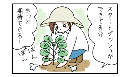 スタートダッシュができてる分、きっと期待できる!芽キャベツの大苗を庭の畑に植えた