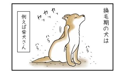 換毛期の犬(例えば柴犬さん)は。足で体を掻いて毛が大量に抜ける