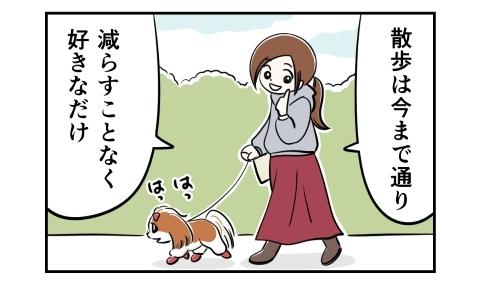 犬の散歩は今まで通り、減らすことなく好きなだけ行きました