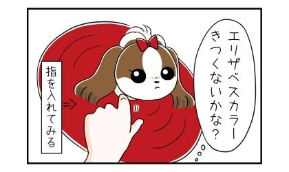エリザベスカラーを付けた犬の首に指を入れてみる。エリザベスカラーきつくないかな?