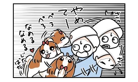 犬が顔に塗ったヨーグルトを舐めようとする