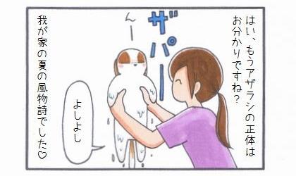浴槽のアザラシ-4