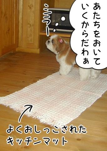 よくおしっこされたキッチンマットとシーズー犬まろん