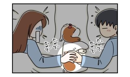 なんと隣で寝る夫も手で犬を撫でていた。私はその夫の手を撫でていたのだった