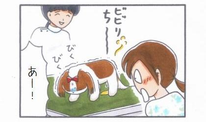 ビビリまろんの動物病院へGO!-失禁編--4
