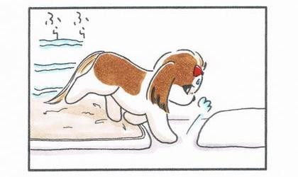 毛布の上で丸まって寝ていた犬が起きて毛布から降りる