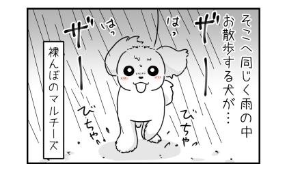 そこへ同じく雨の中お散歩する犬が…。裸んぼのマルチーズ