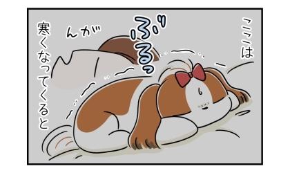 ここは寒くなってくると。飼い主の枕で寒くてぶるっと震える犬