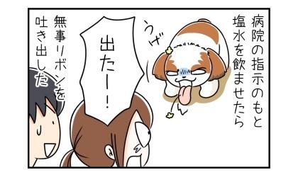 動物病院の指示のもと犬に塩水を飲ませたら、無事リボンを吐き出した。出たー!ほっとする飼い主