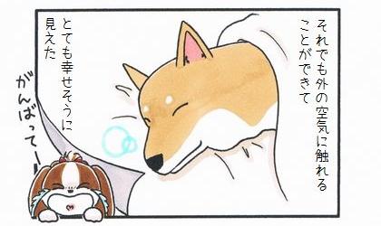 カートに乗った犬 ~久しぶりの再会~-4
