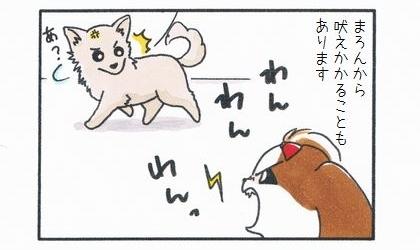 うちの犬から向こうの犬に吠えかかることもあります。わんわん吠えたらチワワが振り返る