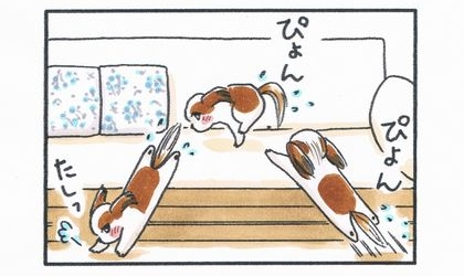犬が濡れたままソファに飛び乗り降りる