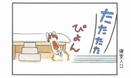 犬用階段凸ショートカット編-3