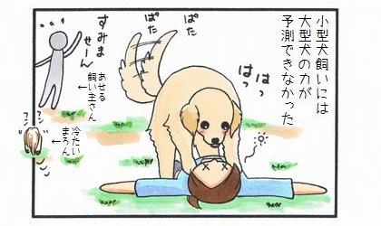大型犬の威力-4