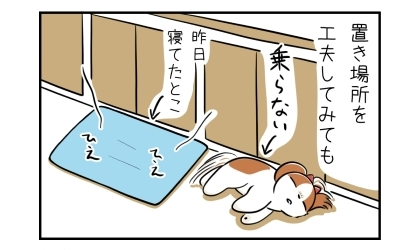 置き場所を工夫してみても。昨日犬が寝てたとこにクールマットを置いても乗らない