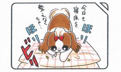 犬が今日も寝床を整えなくちゃとクッションをほりほり。クッションカバーが破れる