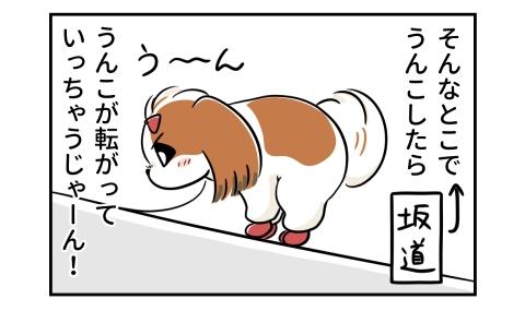そんなとこ(坂道)でうんこしたら、うんこが転がっていっちゃうじゃーん!ふんばる犬