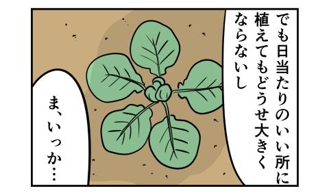 でも日当たりのいい所に植えてもどうせ大きくならないし、ま、いっか…。と諦めていたが