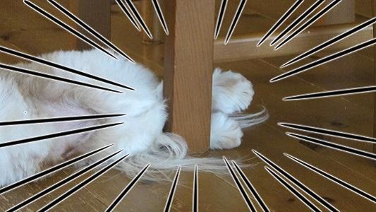足を椅子の脚で揃えて寝るシーズー犬まろん拡大図