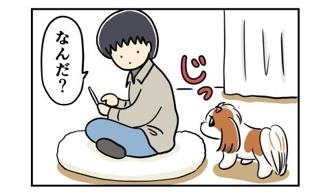 クッションに座った夫をじっと見つめる犬
