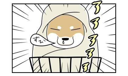 自転車のかごに乗った柴犬は、毛布に包まれていた。鼻を垂らす寒がりな柴犬