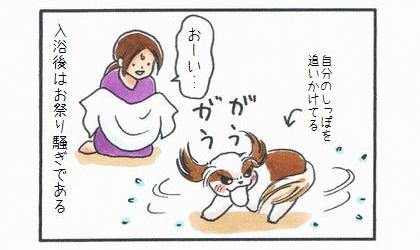 犬が自分のしっぽを追いかけてぐるぐる回る。入浴後はお祭り騒ぎである。タオルを持って待ち構える飼い主