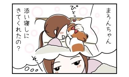 犬が添い寝しにきてくれたの?犬の顔と私の顔が触れあっていると思った私。そーっと目を開けてみると