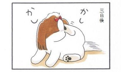 外耳炎のお話☆カウントアップ-2