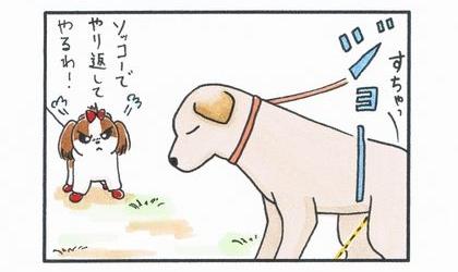 vs 大型犬 ~縄張り争い~-2