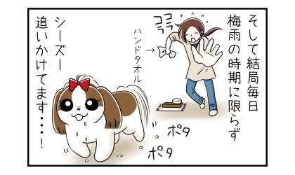 そして結局毎日梅雨の時期に限らず、犬の口を拭くためにハンドタオルを持ってシーズー追いかけてます…!