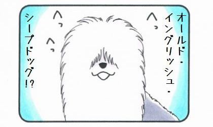 オールド・イングリッシュ・シープドッグ-3