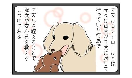 マズルコントロールとは元々は母犬が子犬に対して行っていた行為で、マズルを咥えることで服従や安心感を教えるしつけである