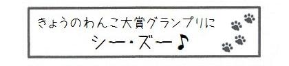 きょうのわんこ大賞グランプリにシー・ズー♪-0