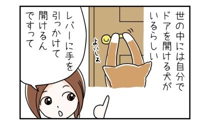 世の中には自分でドアを開ける犬がいるらしい。レバーに手を引っかけて開けるんですって
