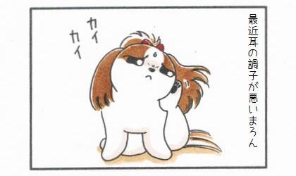 最近耳の調子が悪い犬。痒くて後ろ足で耳を掻く犬