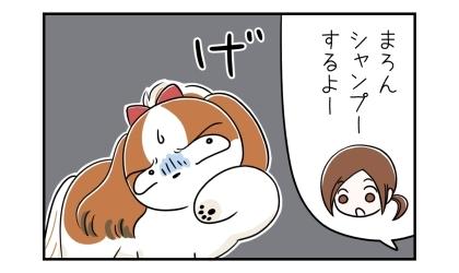 犬、シャンプーするよー。げ、と嫌そうな顔をする犬